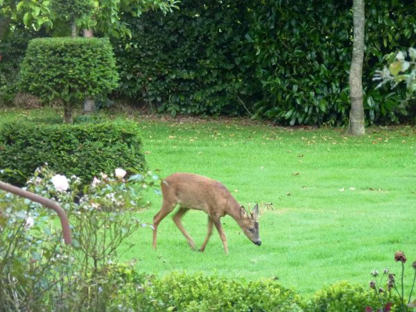 Wildlife at Manoir du Vaugarny
